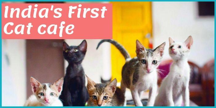 Cat Cafe इंडिया का पहला बिल्लियों का कैफे