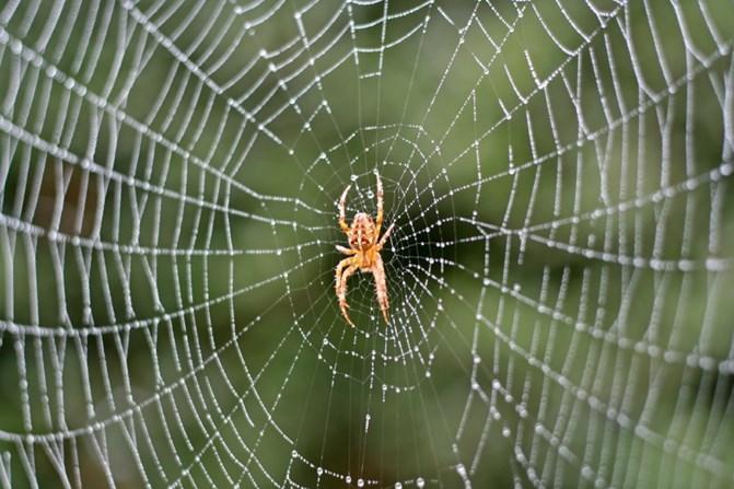 Spider - मकड़ी अपने जाल में कभी खुद क्यों नहीं चिपकती है ?