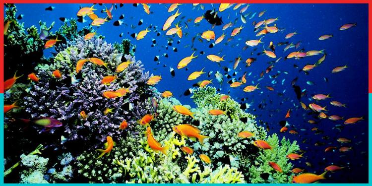 Sea,oxygen