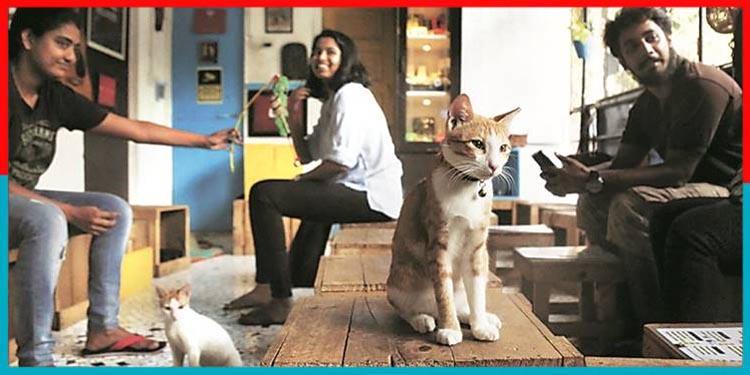 कैट कैफे.Cat Cafe in india