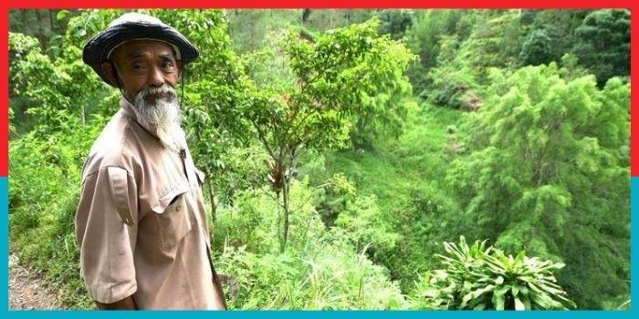 ग्रीन हीरो सदिमान, जिसने बदल दी अपने क्षेत्र की पूरी तस्वीर, लगा ड़ाले 11 हज़ार बरगल-पीपल के पेड़